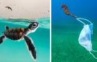 16 foto finaliste di questo contest ci mostrano meraviglie e debolezze dei nostri mari