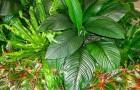 Prepara un lucidante per le foglie che non danneggia le piante usando ingredienti comuni