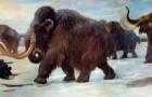 Ein Team von Wissenschaftlern will das Mammut wiederbeleben, das vor etwa 10.000 Jahren ausgestorben ist