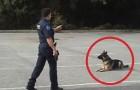 De agent wijst alleen met z'n vinger: kijk wat de hond doet