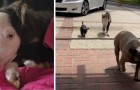 Maak kennis met Peabody, het kleinste paard ter wereld dat denkt dat hij een hond is