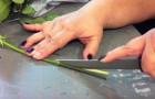 Taglia in 4 gli steli di alcune rose: il suo esperimento dà un risultato meraviglioso!