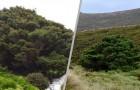 L'affascinante storia dell'albero più solitario del mondo: si trova in Nuova Zelanda ma non è nato lì