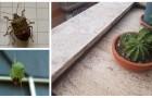 Allontana le cimici dal balcone con questi rimedi naturali e fai-da-te