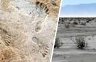 Ces empreintes fossiles montrent que les humains étaient présents en Amérique du Nord bien plus tôt qu'on ne le pensait