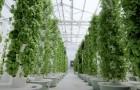 Agricoltura aeroponica: l'innovativa tecnica che consente di