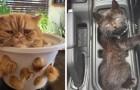 Katzen im flüssigen Zustand: 15 Fotos zeigen uns, dass sie sich jeder Form anpassen können