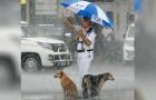 Verkeersagent deelt zijn paraplu met twee zwerfhonden: hij wilde ze beschermen tegen de hevige regen