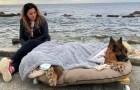 Le regalan al perro ya paralítico un último paseo a orillas del mar en una cama móvil