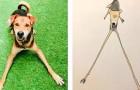 Questo artista realizza disegni di animali così bizzarri da risultare quasi convincenti