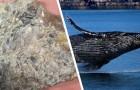 Video Walvideos Wale