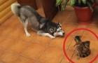 Hij wil spelen ... maar de reactie van zijn vriend is duidelijk!