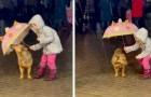 Bimba decide di proteggere il cane dalla pioggia battente con il suo ombrello: le immagini sono dolcissime
