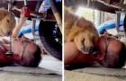 Il proprietario fa il meccanico e il suo cane si mette sotto all'auto per farsi coccolare da lui: le tenere immagini