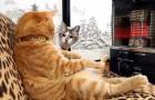 Quando vedrete cosa fa questo gatto, proverete di sicuro invidia per lui!