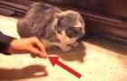 Cerca di dare un premio al suo gatto, ma continua ad accadere qualcosa di esilarante