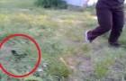 Ven alguno moverse entre la hierba: este es un encuentro de verdad ADORABLE