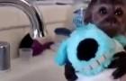 La toilette du bébé singe