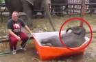O elefantinho que se diverte na sua 'piscina'