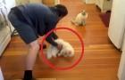 Er lässt die Katze über den Fußboden schlittern... Ihre Reaktion? Süß!
