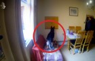 They put hidden cameras in the house: what they discover about their dogs makes them cry!!