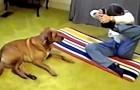 Elle essaie une position difficile de yoga. La réaction de son chien? Trop drôle!