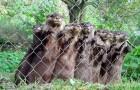 De beheerder van het asiel komt langs bij de otters: hun reactie is onbetaalbaar