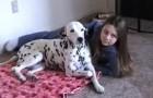 Le père leur dit de sourire pour la photo : ce que fait le chien fait hurler de stupeur!