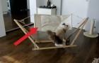 Ils offrent au chat une nouvelle couchette: ses premières tentatives sont trop drôles!