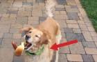 Un perro busca de agarrar la comida en el aire: se enamoraran AL INSTANTE