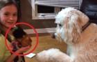 Porta a casa una cavia domestica, ma non si aspettava dal cane una reazione così...