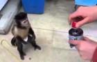 Una scimmia si compra da bere da sola