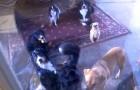 Eine Frau schließt ihre Hunde in der Garage ein: Schaut, was passiert, wenn sie sie hineinlässt