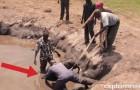 Un elefantino di 5 giorni è in pericolo... ecco come questi angeli lo portano in salvo