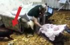 Un uomo fa finta di trattare male un neonato... Guardate la reazione del gatto!!!