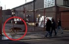 A dog waits behind a gate: why ? This will make you smile!