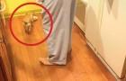 Den här hunden har förstått att man kan äta på fler än ett ställe. Allt för att inte vara ensam!