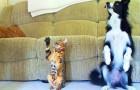 Er sagt zum Hund und zur Katze, dass sie rollen sollen: Das ist der sympathischste Wettstreit, den ihr je gesehen habt!
