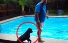 Een man staat op de rand van het zwembad: wat de hond doet is... DUIVELS!