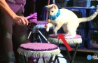 Una donna adotta dei gatti e mette in piedi uno spettacolo UNICO nel suo genere