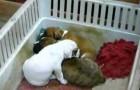 Canta una canción de cuna para los cachorros!