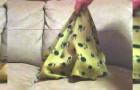 Ze bedekt haar hond met een deken... als ze de deken weghaalt, komt ze niet meer bij van het lachen!