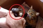 They put a dog in a litter of cats: the reaction of the mother is amazing!