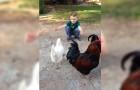 Un niño pide un abrazo: la reaccion de la gallina los dejara con la boca abierta