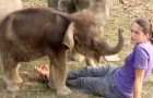 She sits in front of some elephants ... now watch what the youngest one does: hilarious!