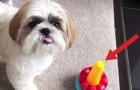 Mette un giocattolo di fronte al suo cane. Cosa fa lui? Resterete senza parole!