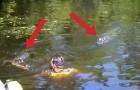 When this man dived in the water with the alligators, the tourists couldn't believe their eyes