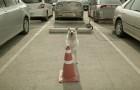 Ein Hund wartet auf seinen Freund auf dem Parkplatz: Der Grund wird euch Freude machen