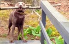 He's trying to get over the bridge with his stick ... and just a few seconds later he solves the problem like this...!