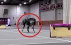 Wat deze robot kan is op zich al angstaanjagend, maar kijk wat hij met obstakels doet...